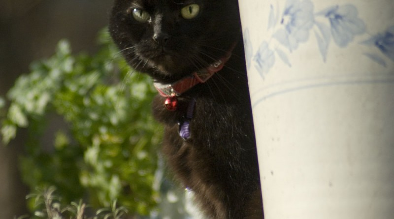 Mimi enjoys a few minutes of morning sun from the top of the steps. Enjoy the sun