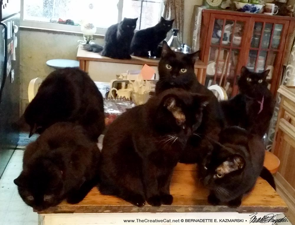 Good morning! All eight just hanging out in the kitchen on a rainy morning.