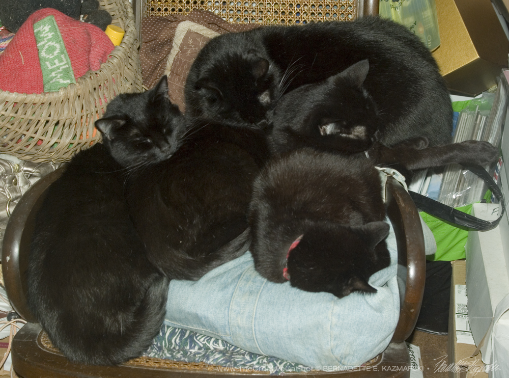 Four cats tossed onto the rocker.