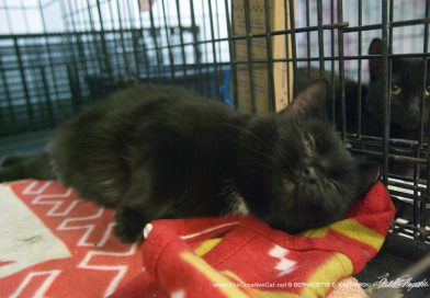 Cats for Adoption: Jumper and Bella