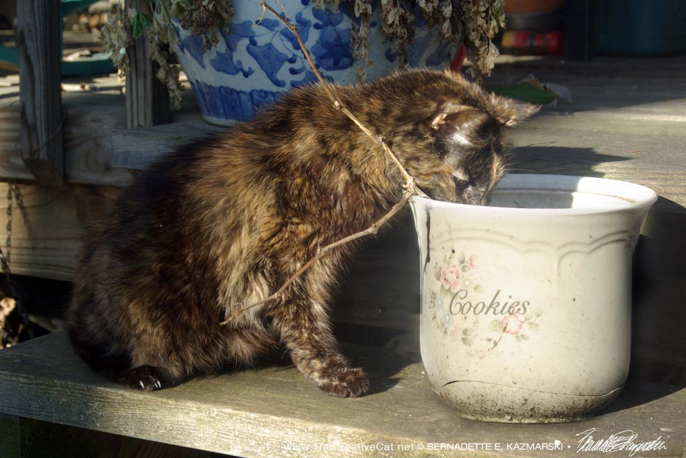 "Cookie checks the ""cookie jar"", an old canister I used for outdoor plants this year."