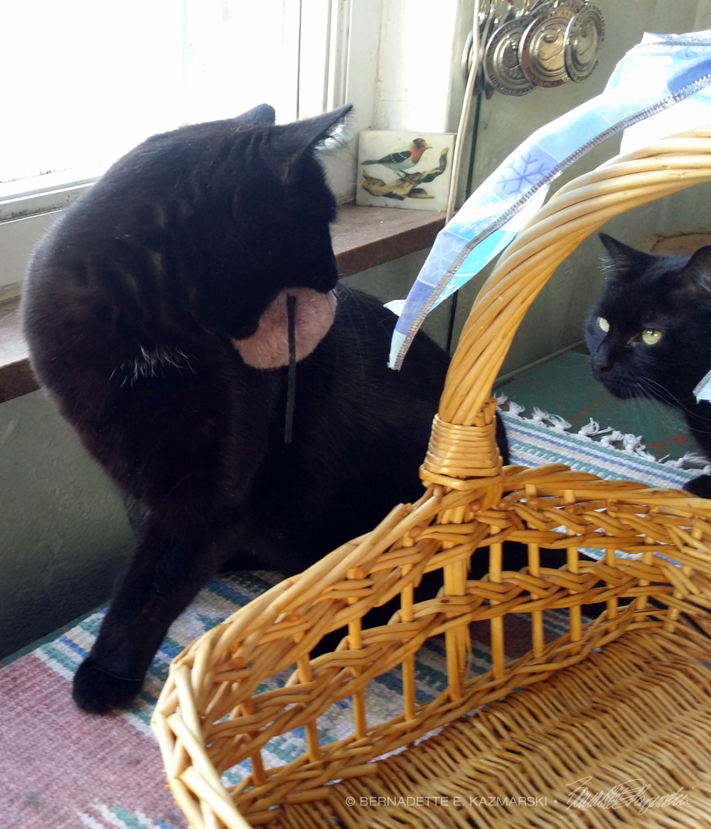 two black cats with basket and mousie