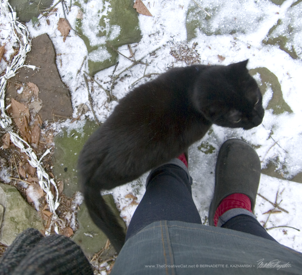 Mimi attempts to balance on one of my shoes.