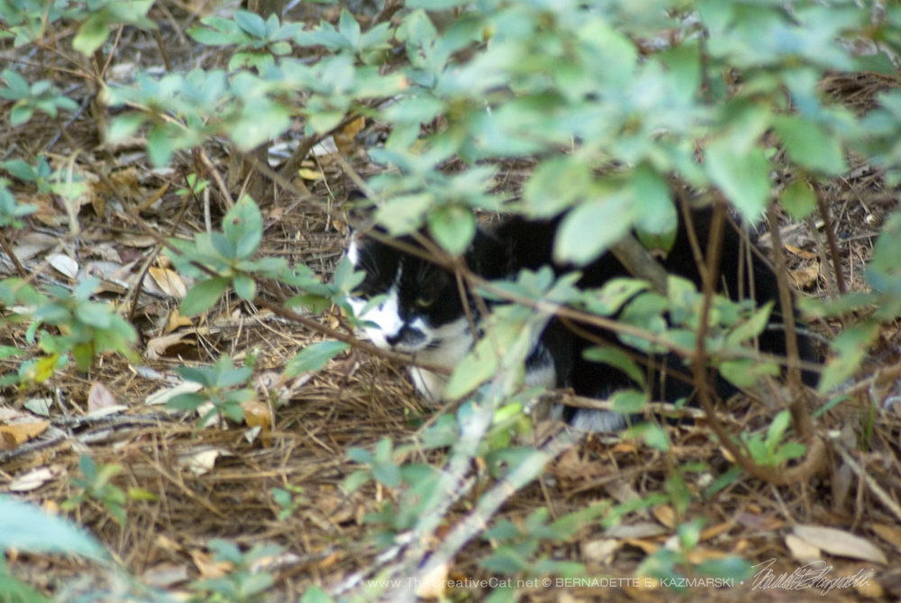 Daily Photo: Far Away Ferals