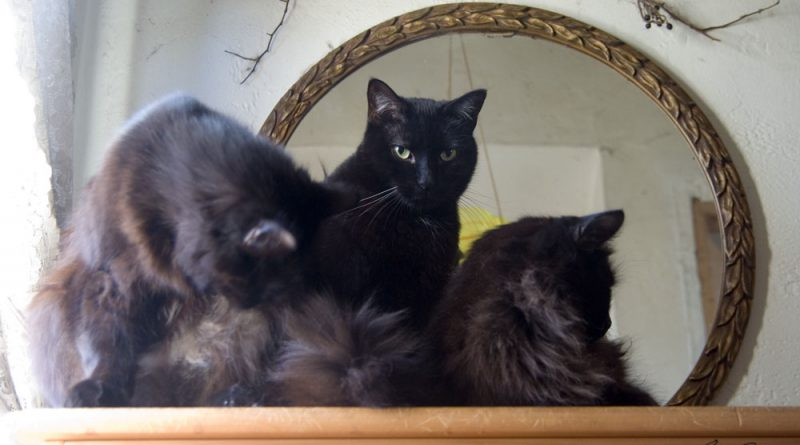 What a nice arrangement of black cats.