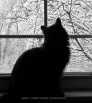 Ophelia watching snow.