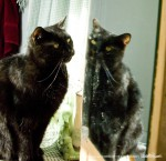 Mewsette in the mirror.