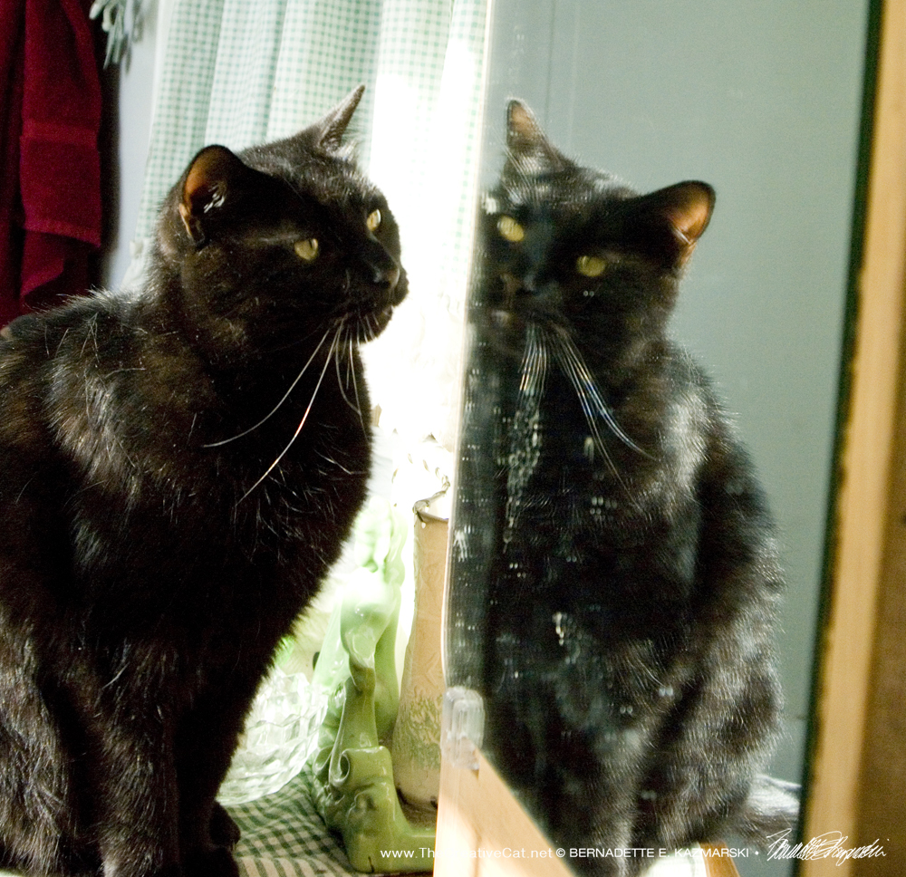 Daily Photo Reprise: Who Is That Kitty in the Mirror? 2013