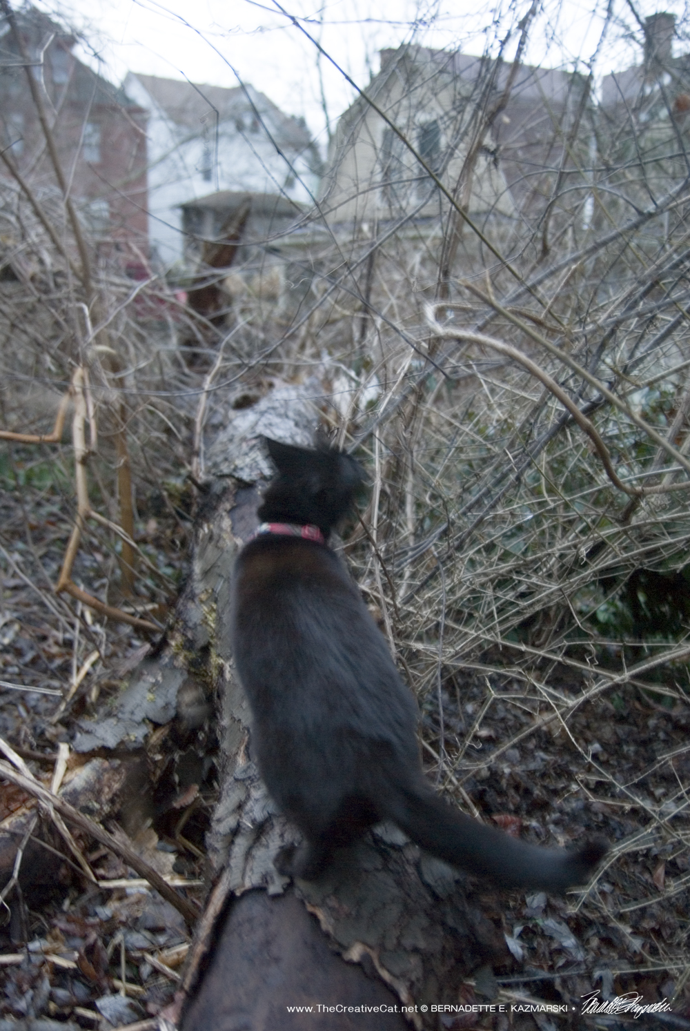 Mimi walks along the tree trunk on the ground.
