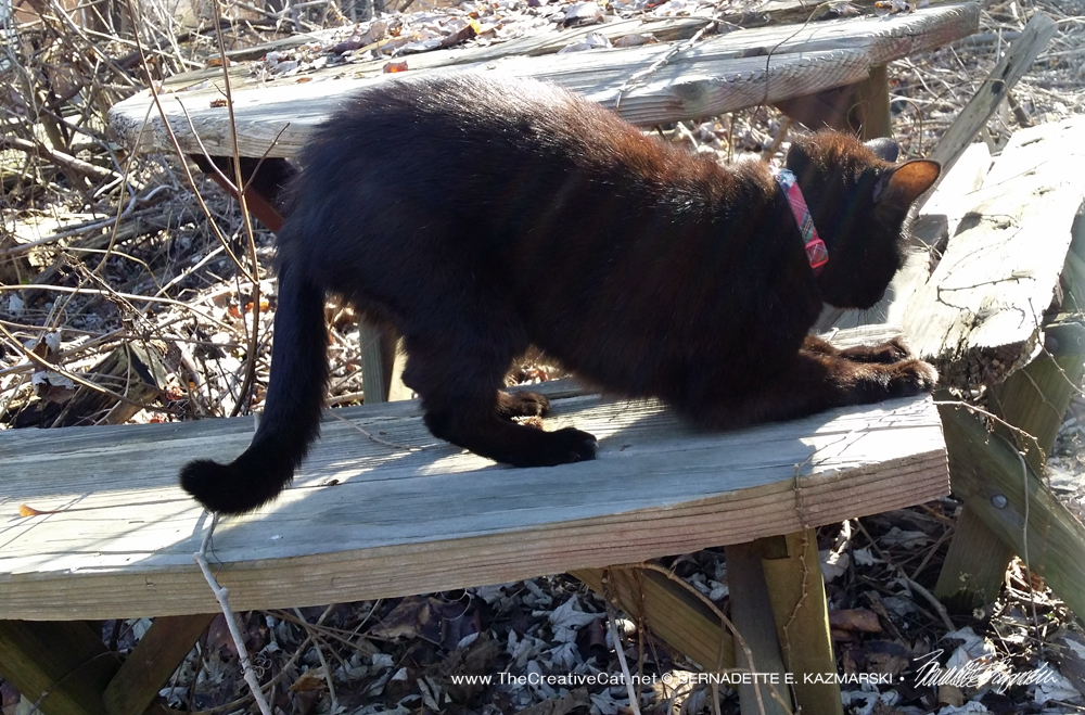 Mimi has a good scratch on her picnic table.