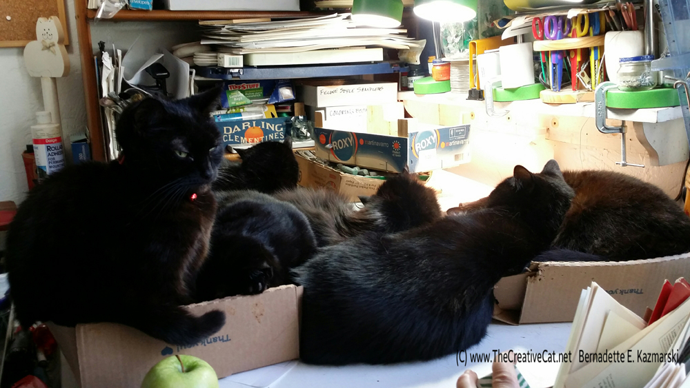 Okay, what do you think Mimi is thinking? There are six black cats on the table, one of them does not belong to her. She had to fit herself into the corner of the box Giuseppe is sleeping in. This is how Musical Boxes ends up when you play with cats.