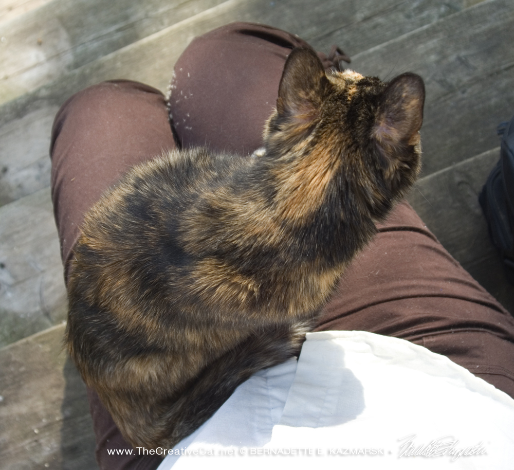 Cookie sits on my lap as we take a break on the steps.