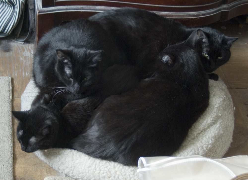 four black cats on a kitty beanbag