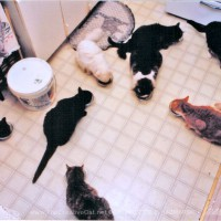 My household of nine cats enjoying dinner.