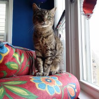 tabby cat on flowered couch