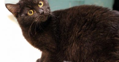 Cats for Adoption: Adorable Nora