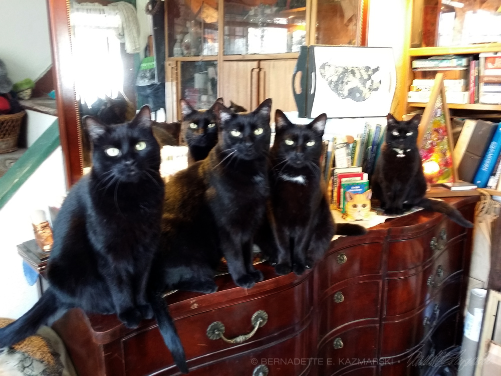 five black cats on dresser