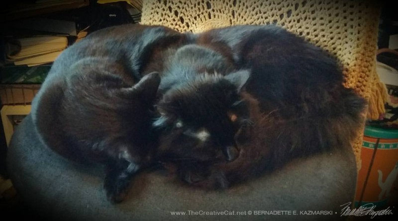Basil and Bella on the chair.