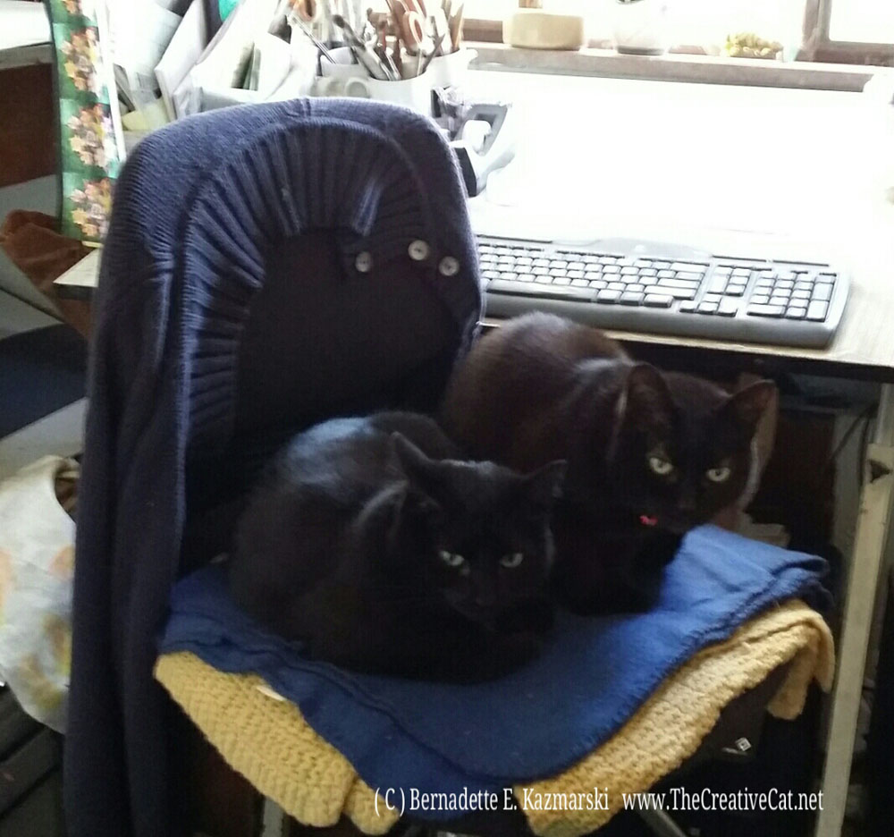Mimi and Bella stole my chair!