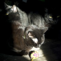 Three black cats sharing one sun beam.