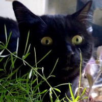 black cat with asparagus fern