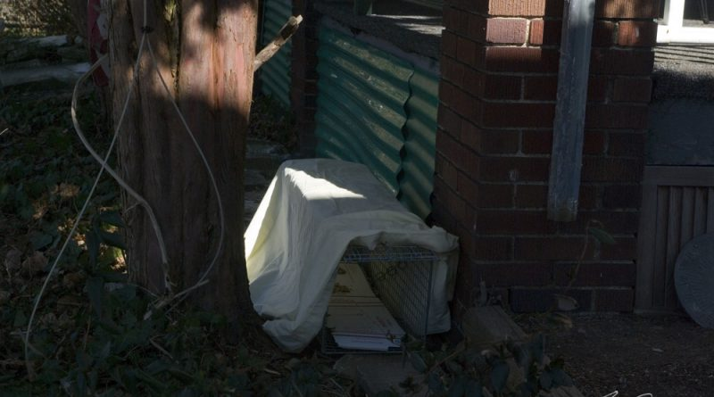 Trap 1, in front of the access under the porch where they are usually fed.