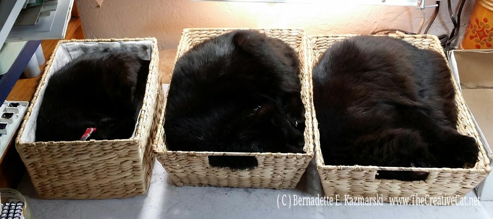 Cat Loaves rising in their baskets in my studio while I work. Mimi, Sunshine, Basil.