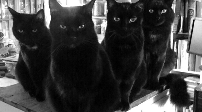 The Four Housecats of the Apocalypse are waiting for dinner.