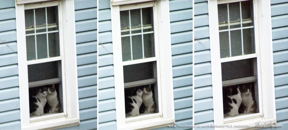 My neighbor cats in their window.