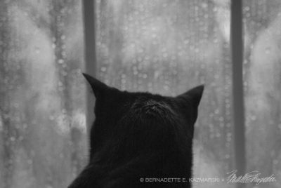 Giuseppe watches the rain.