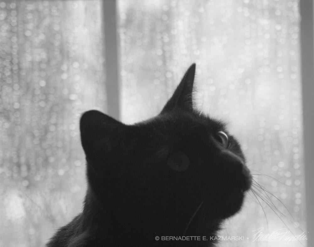 daily photo reprise of the rain and giuseppe the creative cat searching