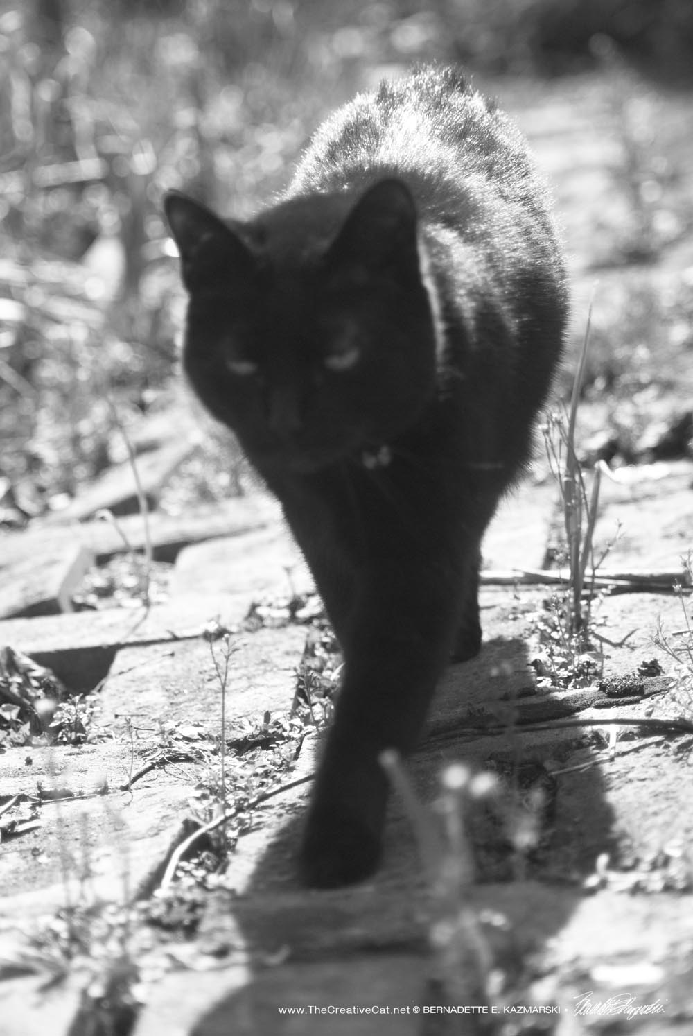 Daily Photo: Black and White on the Garden Path ~ The ...