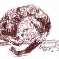 conte sketch of cat sleeping