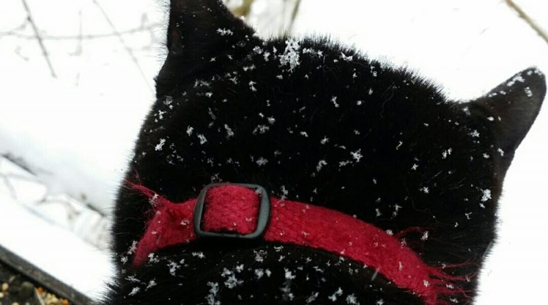 Mimi with snow.