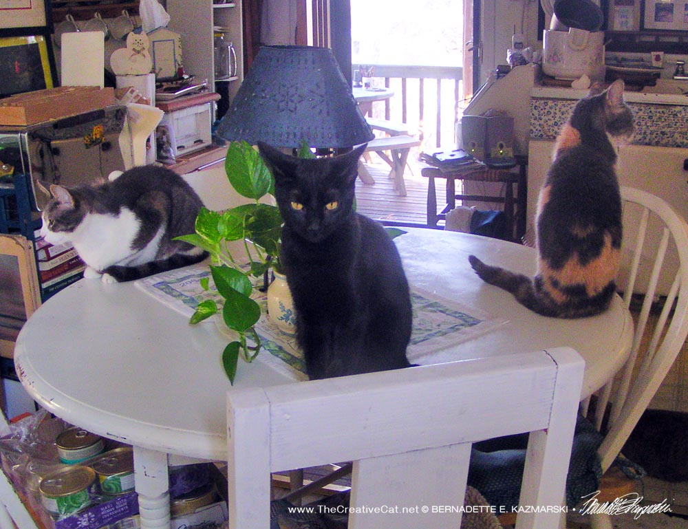 Lucy, Peaches and Namir on the table, another view.