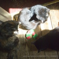 The girls organized an impromptu catnip party to celebrate a sunny morning.