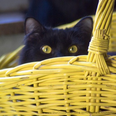 """Did I miss the Easter Bunny? I wanted to play with him!"" Basil is very disappointed! Can't pass up an opportunity for a good cat-in-a-yellow-basket photo."