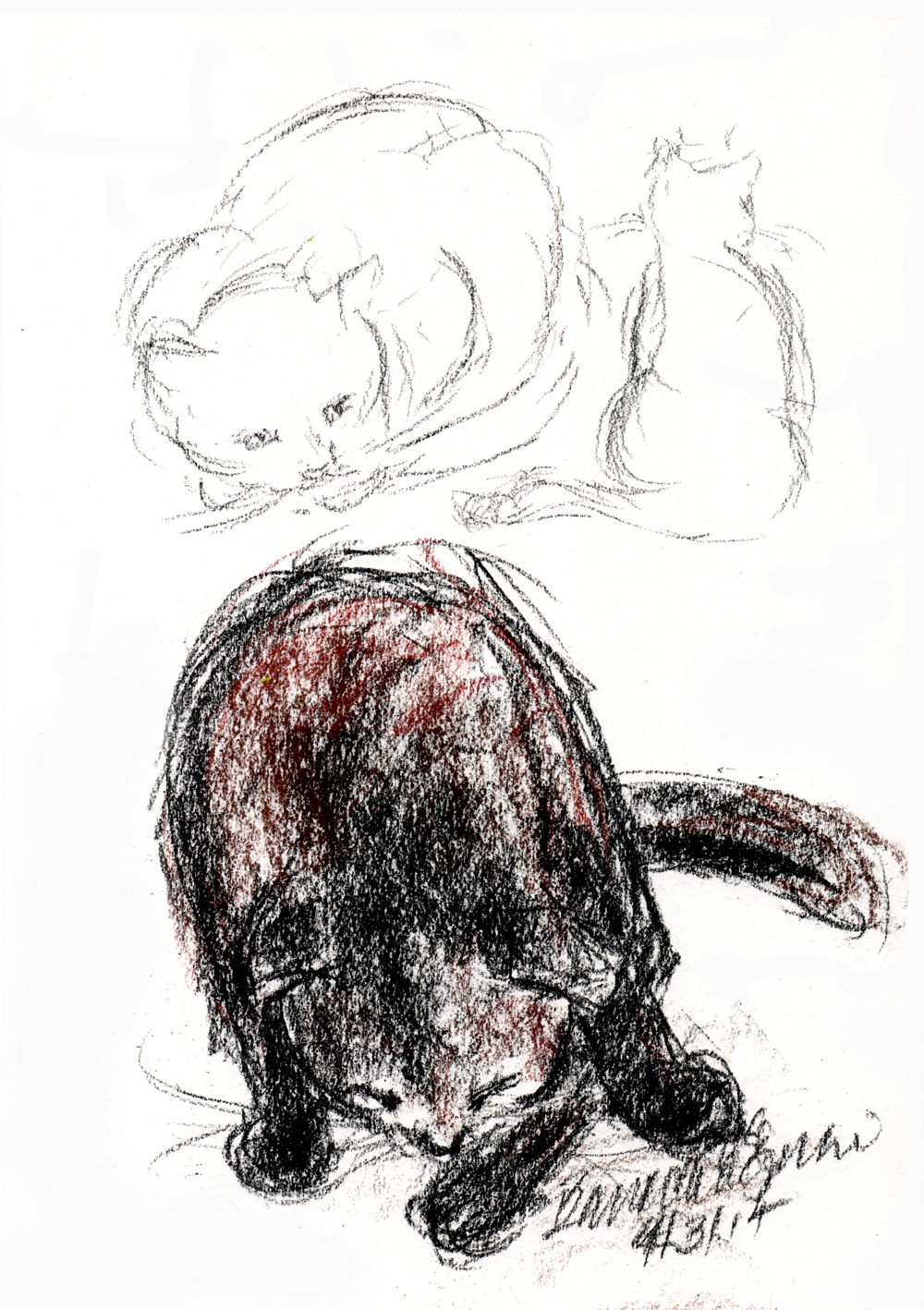 conte crayon sketches of cat