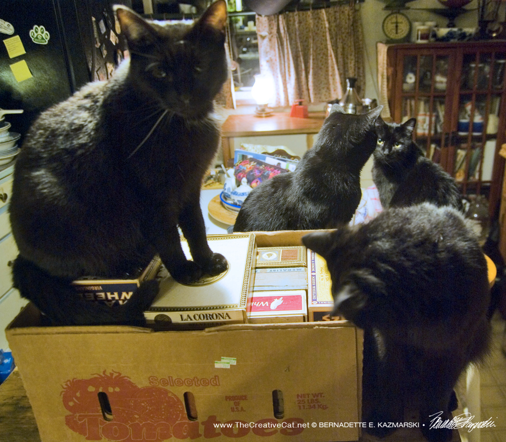 Jelly Bean gets his turn as Basil watches and Sunshine and Bella discuss this latest project.