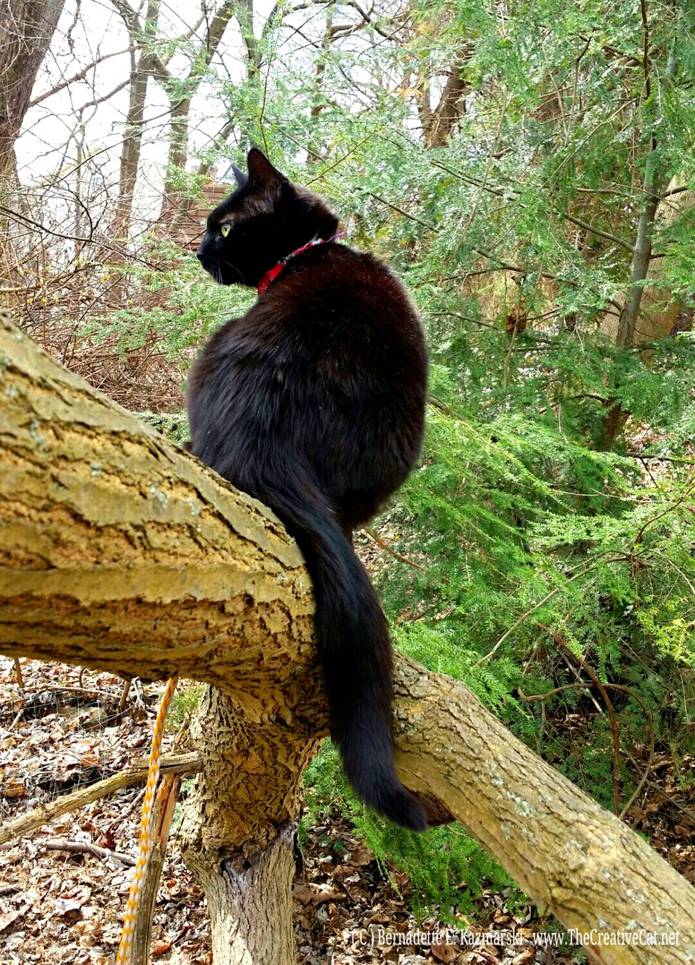 Little Tree Panther