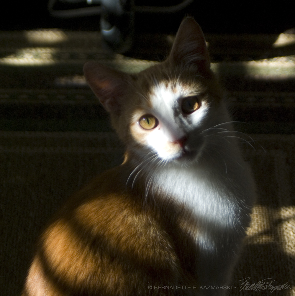 orange and white cat in shadows