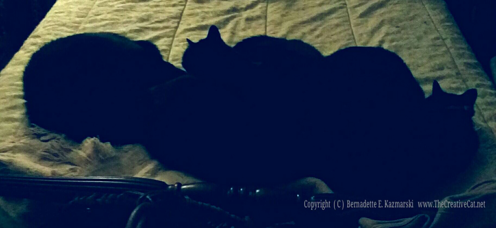 The cat pile with normal evening light.