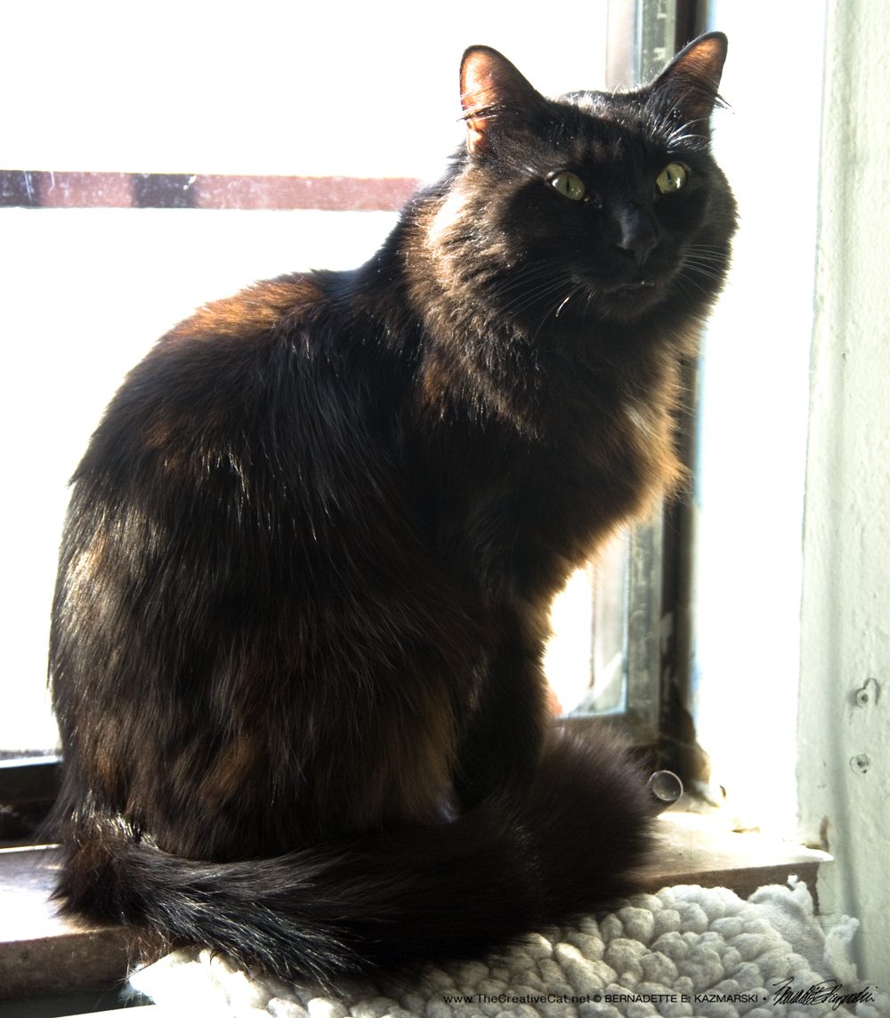 Basil enjoying the sunny studio windowsill.
