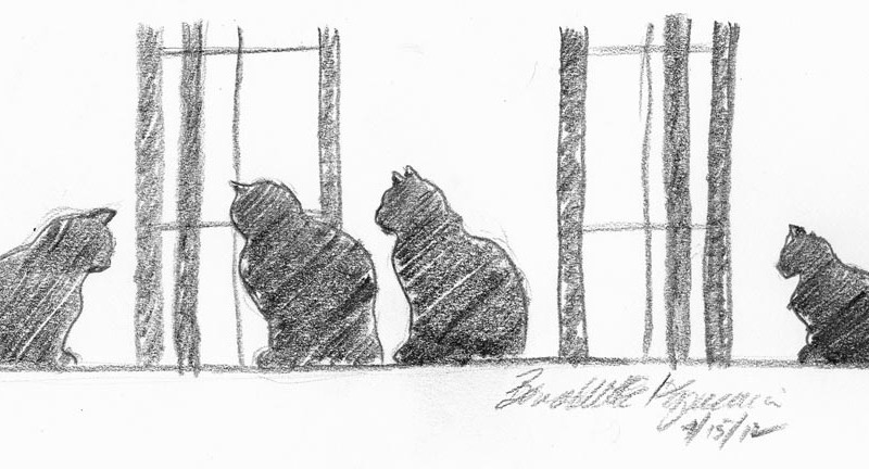 window pencil drawing. four cats at the window, pencil, 9\ window pencil drawing