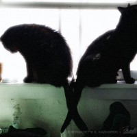 two black cats on windowsills