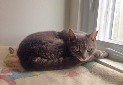 Cats for Adoption: An Update on Whisper