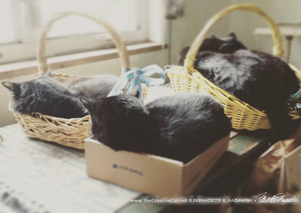 Conserving energy, reusing and repurposing shipping boxes and baskets the human pulled from a neighbor's trash, cuddling to keep warm, celebrating Earth Day.