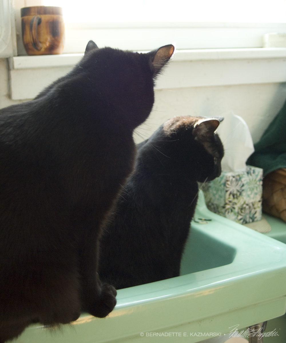 two black cats in sink