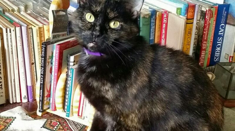 Sienna in the cat book library.