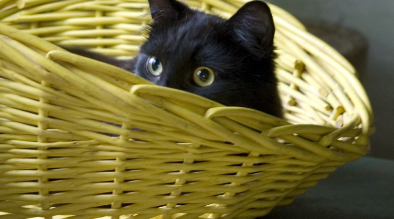 I'm sure no one will see you in the yellow basket, Hamlet.